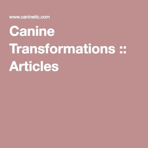 Canine Transformations Three Bark Rule Dog Training Methods