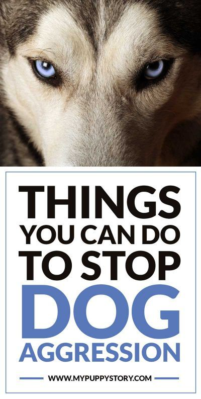 How To Stop Dog Aggression Aggressive Dog Socializing Dogs