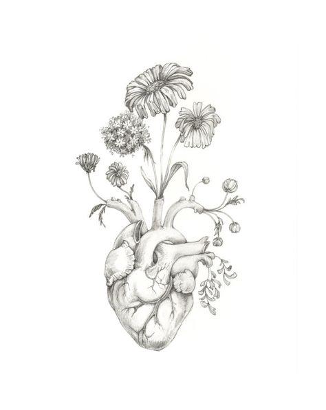 8x10 PRINT of original drawing Blooming Heart- graphite, art, anatomy, floral, heart, valentine via Etsy