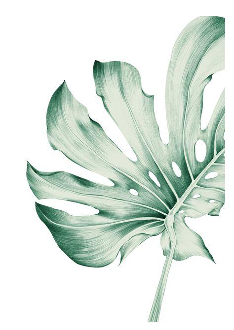 "Monstera Leaf 1 Rectangular Pillow by L. Iwamoto - Small (17"" x 12"")"