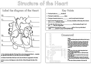 High School Biology Heart And Circulation Worksheet Pack Biology Worksheet Heart Structure Biology Revision