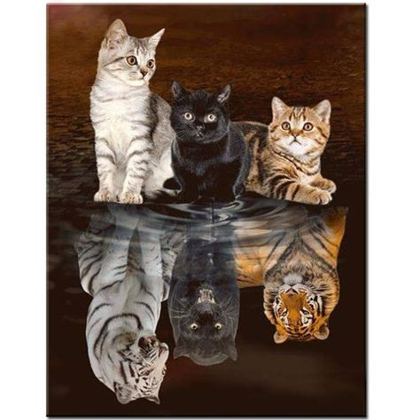 5d Diy Diamond Painting Cats tigers Full Square/round drill Resin Rhinestones Mosaic full Embroidery display Cross Stitch Home Decor