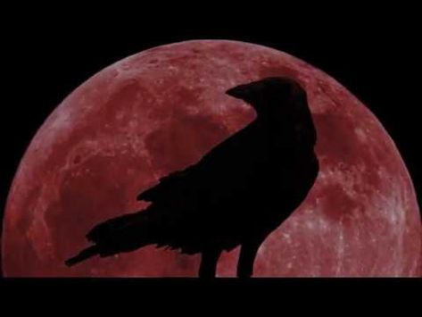 The Raven By The Alan Parsons Project In 4k Uhd Hq Audio In 2020