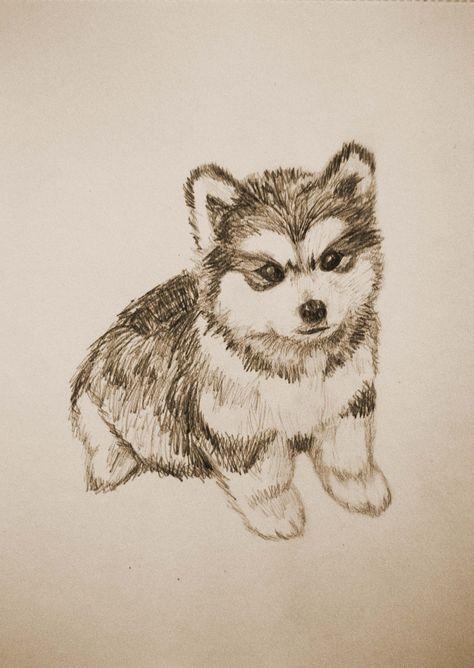 Dibujo de un cachorro de husky / Drawing of a husky puppy. Bocetos de perros / Sketches of dogs.
