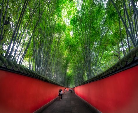 Here's a new photo I just finished from this amazing bamboo forest. Chengdu is known as the home of the Panda Bears in China. I don't love the way they treat animals and stuff in China, but it's still a beautiful place. I try and imagine Panda Bears swinging around free and eating bamboo ice cream or whatever they eat. #TreyRatcliff #China #Chengdu #Bamboo #Forest #HDR