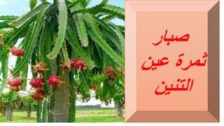 البيت العربي انواع نباتات الصبار وفوائدة للبشرة والشعر Plants Herbs Blog Posts