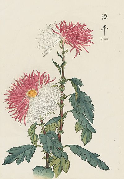 Chrysanthemum Flowers By Keika Hasegawa Japanese Woodblock Printing Japanese Painting Chrysanthemum Flower