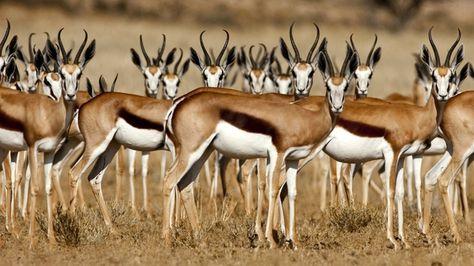 Afbeeldingsresultaat voor Namibia wallpaper