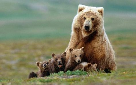 子どもをいっぱい連れた熊