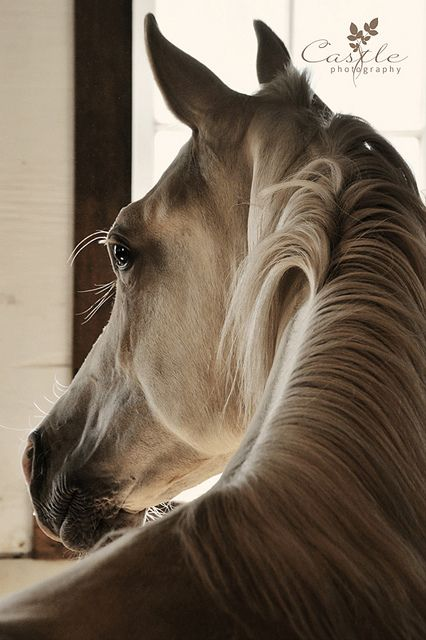 Even horses can have beautiful portraits!! I LOVE!