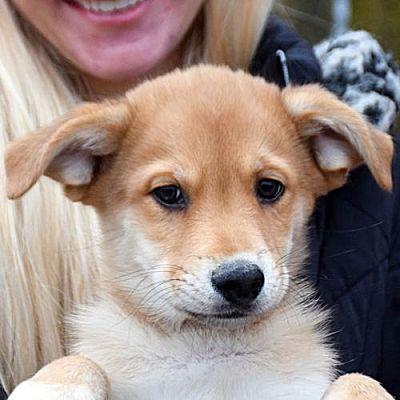 Huntley Il Border Collie Meet Pontiac A Pet For Adoption Adopt Me Pet Adoption Shelter Dogs Pets