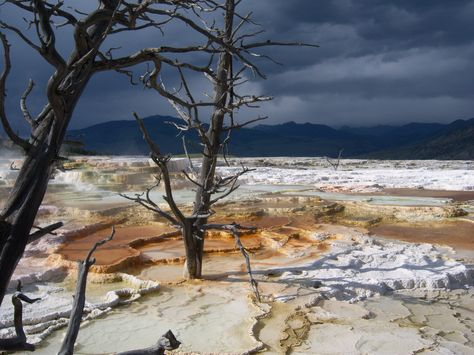 yellowstone geysers and hot springs | ... ! > Parco Nazionale di Yellowstone > yellowstone mammoth hot springs