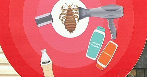 Piolhos E Lendeas Nao Tem Relacao Com A Falta De Higiene Dos