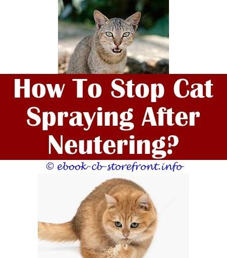 3 Youthful Tips And Tricks How To Stop Male Cat From Spraying Inside The House How To Stop Male Cat From Spraying Inside The House How To Get Cat Spray Out Of