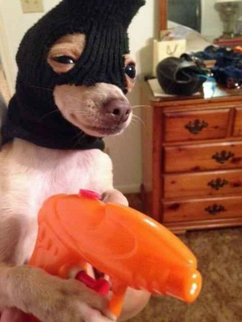 """""""No, I'm wearing this mask to ask for treats politely. Can you not with these questions?"""""""