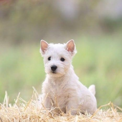 Kuwait Dogs And Puppies Adoption And Sales S A Platform Where You Can Buy Sell And Adopt Puppies And Dogs I Puppy Adoption Teacup Puppies Maltese Maltese Puppy