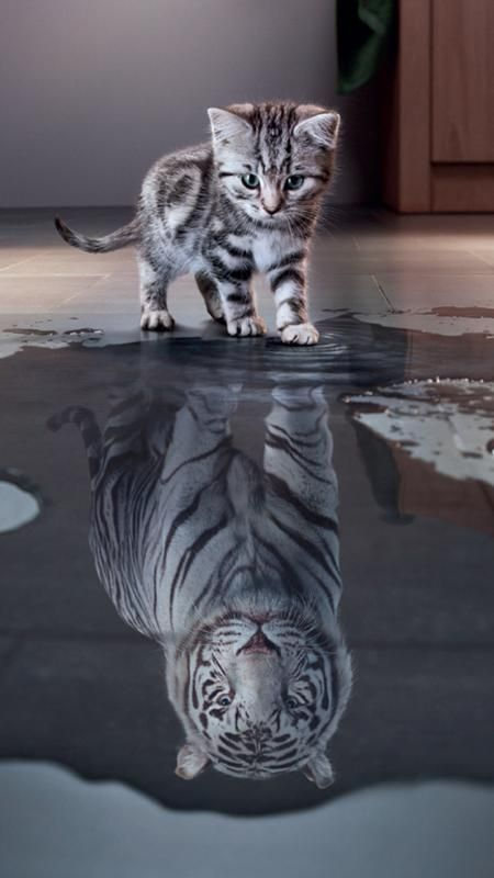 Free Kitten Wallpapers For Your Phone Kitten Cat Leopard Reflection Wallpapers Android Iphone Cute Cat Wallpaper Kitten Wallpaper Kitten Images