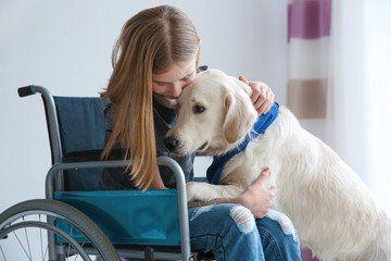 Bergen County Nj Rockland County Ny Therapy Dog Training