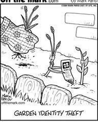 Pin By Laura Embrey On Flowers In 2020 Identity Theft Plant Jokes Gardening Humor
