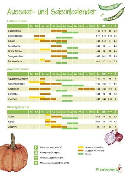 Aussaatkalender 2019 Pflanzkalender Fur Gemuse Pdf Download Plantopedia De Pflanzkalender Aussaat Kalender Pflanzen