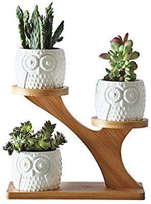 Amazon Com 2 75 Inches Ceramic Modern Decorative Small Owl Pot With 3 Tier Bamboo Stand 3pcs Owl Pots Small Indoor Plants Small Plant Stand House Plants Decor