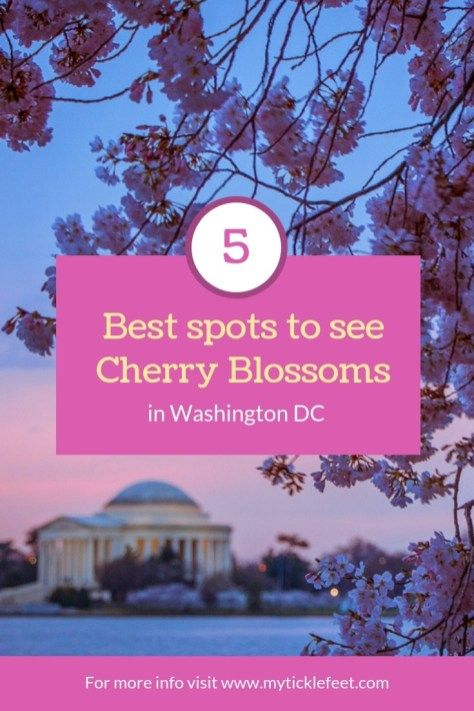 Where To See Cherry Blossoms In Washington Dc Most Photographed Spots Plus Hidden Gems My Ticklefeet Washington Dc Cherry Blossom Dc Travel Usa