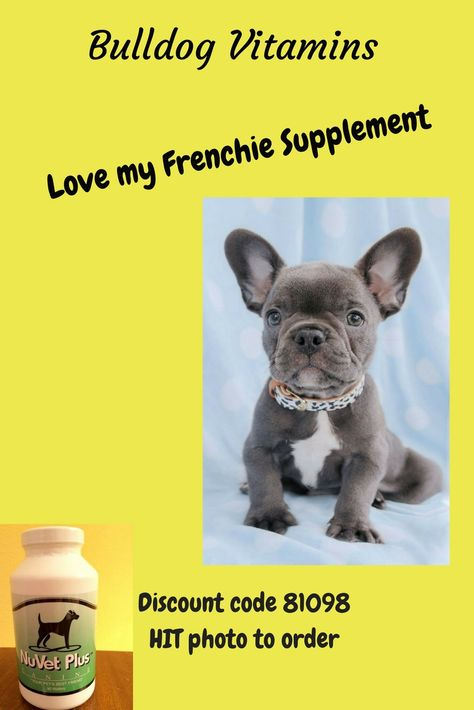 English And French Bulldog Vitamin Supplements Itchy Pet Bulldog Online Pet Supplies