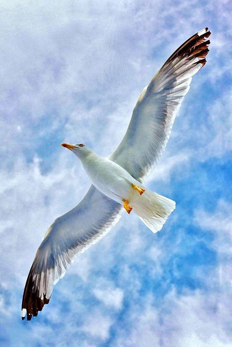 Pin De Ossorium En Pajaros Aves Volando Fotos De Aves Aves