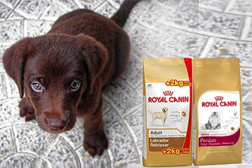 Now Get A Free Container On 4kg Royal Canin Now Get A Free Feeding Bowl With Measuring Jar On Selected 4kg 2kg 1 Dog Food Online Best Dog Food