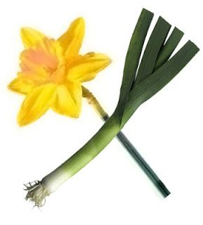 Daffodil And Leek For St David S Day Saint David S Day Symbol Of Wales St Davids Day Recipes