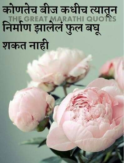 Pin By Sidharth Narvekar On Marathi Pretty Flowers Pink Peonies Beautiful Flowers