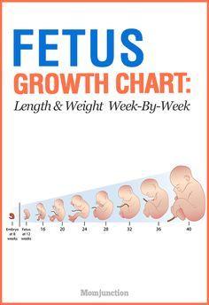 Legjobb tlet A en A Kvetkezvel Kapcsolatban Fetus