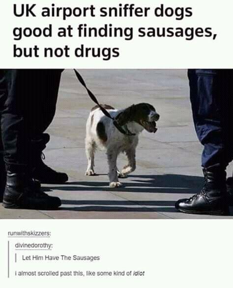 Pin On Dog Memes