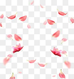 Cherry Blossom Petals Picture Material Flower Png Images Free Watercolor Flowers Graphic Design Business