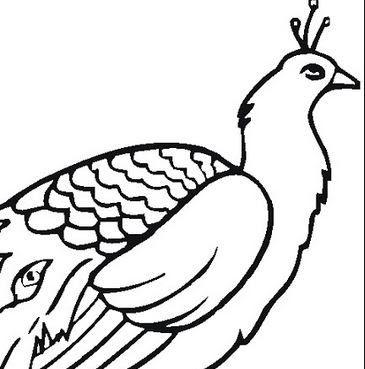 Menakjubkan 29 Gambar Burung Merak Sketsa Cara Menggambar Merak Eksotis Apa Saja Keindahan Kreasi Berbentuk Burung Merak Yang Ca Gambar Burung Burung Gambar