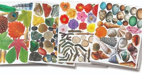 Beautiful die cut pictures of natural objects printed on quality paper. Pop them out and compose pictures! #collageart #collage #elementaryart #nature #naturecrafts #kidscrafts #STEM #earlychildhood #kindergarten
