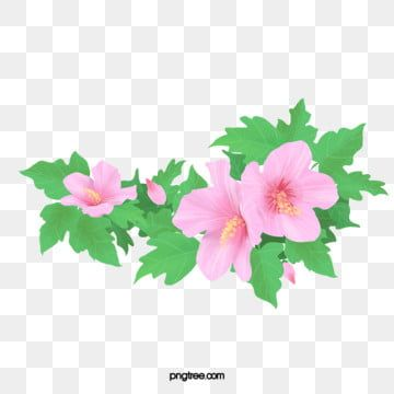 Hibiscus Flower Png Images Vector And Psd Files Free Download On Pngtree In 2020 Flower Png Images Watercolor Flower Background Flower Graphic Design