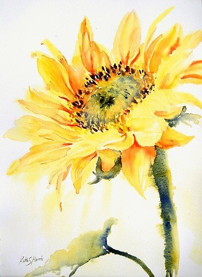 A bright, cheerful sunflower. / Watercolours on Artistico extra white paper, the original work measures 11″ × 15″. • Millions of unique designs by independent artists. Find your thing.