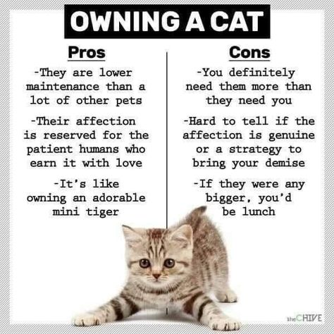 The pros and cons of cat ownership. Click to join us on Twitter for daily updates of our cute patients!