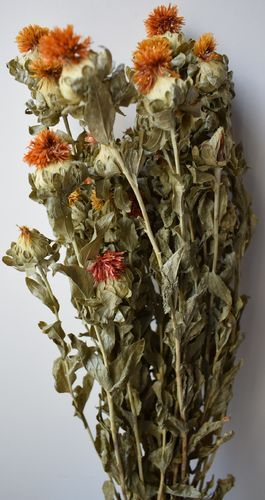 Safflower Dried Flower Bunch Carthamus Tinctorius Is A Natural Orange Dried Flower With A Thistle Like Shape Bunch Of Flowers Dried Flowers Safflower