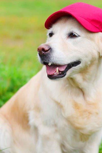 Baseball Related Dog Names Wag Dog Names Top Dog Names Dogs