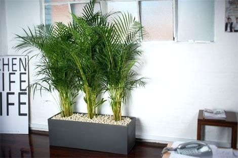 The Alluring Best Plants For Office With No Windows Decorating With Best Indoor Plants For Office Adammayfieldco Office Plants Best Office Plants Window Decor