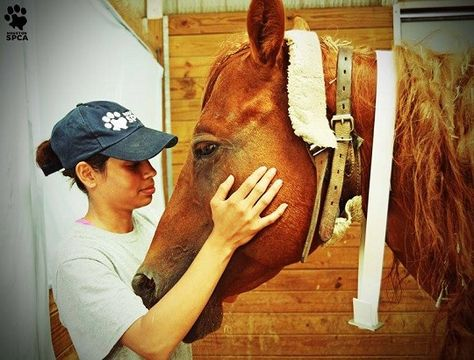 Hoffmans Slapped With Additional Charges In Horse Cruelty Case