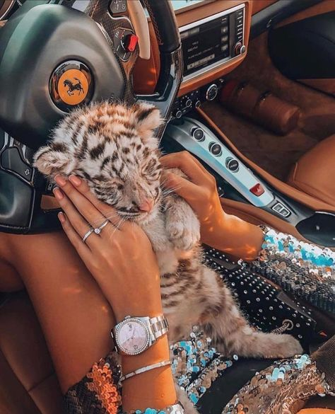 "Doses Of Luxury on Instagram: ""Cuteness overload ❤️🐯 . . #instalike #instamood #style #instagood #beautiful #stylish #fashion #instadaily #instadaily #winter #explore…"""