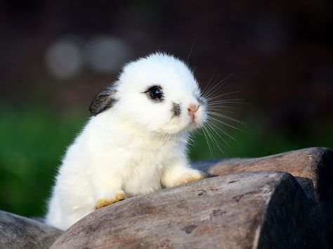 105 Of The Cutest Bunnies Ever