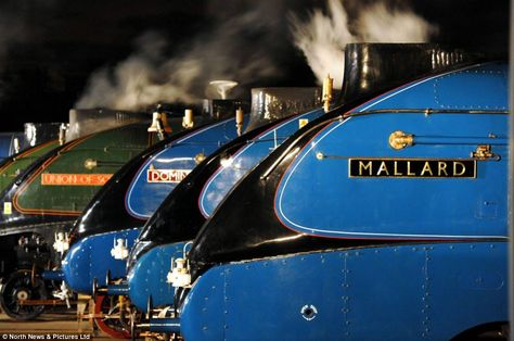 The world's fastest steam locomotive, Mallard (far right) and six of her sister trains were gathered in Shildon, County Durham, yesterday