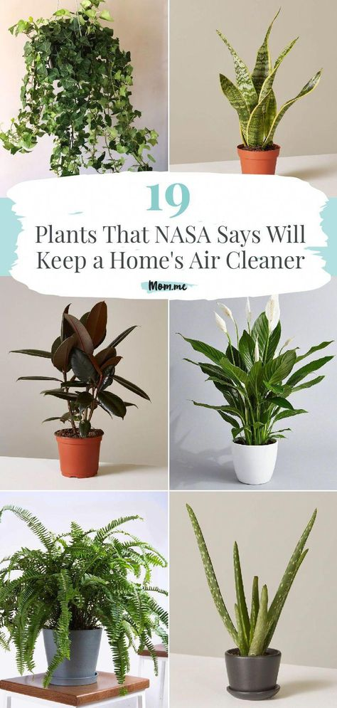 19 Plants That NASA Says Will Keep a Home's Air Cleaner: These potted plants are. - 19 Plants That NASA Says Will Keep a Home's Air Cleaner: These potted plants are for more than ma - Planet Decor, Best Indoor Plants, Indoor Plants Clean Air, Plants That Clean Air, Plants For Home, Air Purifying Indoor Plants, Air Purify Plants, Plants For Patio, Best Potted Plants