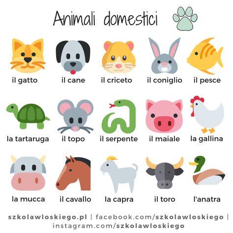 Włoskie słownictwo - Animali (Zwierzęta)