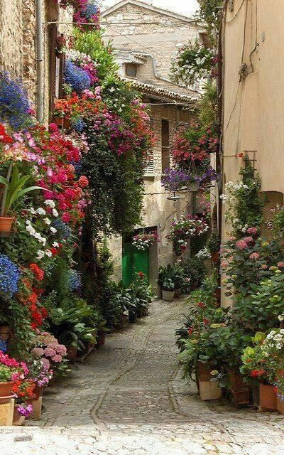 Spello flower festival ~ Umbria, Italy- This is one thing that I loved doing when walking down the streets of Citta Di Castelo, Italy. Looking at all the beautiful flowers. Can I move to Italy? Beautiful Gardens, Beautiful Flowers, Beautiful Places, Beautiful Streets, Beautiful Pictures, Gorgeous Gorgeous, Stunningly Beautiful, Wonderful Places, Amazing Places