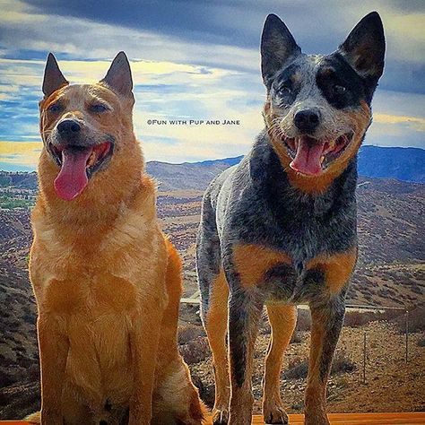 excellent_dogs Beautiful sky w/ Ruger and...